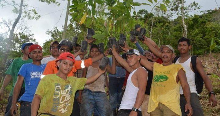 Ejecutan reforestación por compensación ambiental compartida en Bonanza