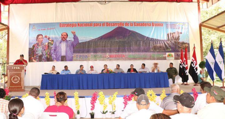 Presentan estrategia nacional de desarrollo de la ganadería